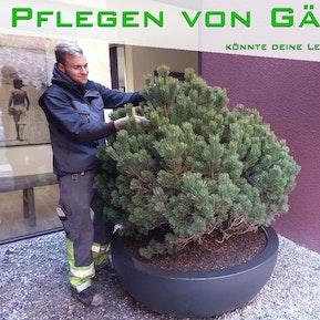 Pflege von Gärten