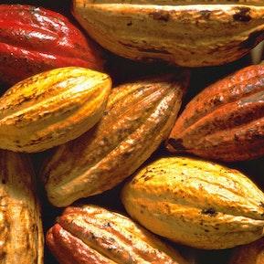 Cacao Bohnen