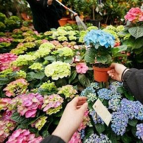 Detailhandelsfachfrau/ -mann Flower EFZ